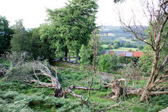 Widok nad działaniem uprawia ziemię po tym jak burza przynosił puszków drzewa Obraz Royalty Free