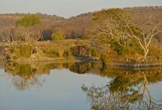 Widok nad jeziorem przy Ranthambore parkiem narodowym Fotografia Royalty Free