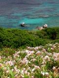 Widok nad kwitnąć skalistego wybrzeże na zmroku - błękitny morze Fotografia Stock