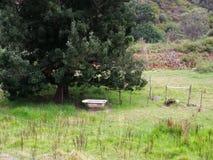 Widok nad rolnym polem zawiera kąpielową balię dla zwierzęcej karmy obok wielkiego drzewa na gospodarstwie rolnym w Robertson w P Obraz Royalty Free