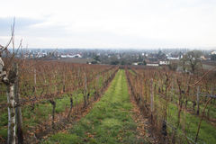 Widok nad winnicami w Hochheim, Niemcy Obrazy Stock