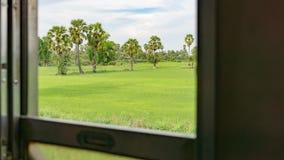 widok natury drzewko palmowe od rocznika starego taborowego okno, Lokalny Th Obraz Stock
