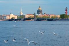 Widok Neva rzeka Dvortsoviy most także znać jako pałac most w Świątobliwym Petersburg obraz royalty free
