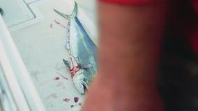 Widok nieżywy świeży złapany fosh na pokładzie jacht w kokpicie zbiory wideo