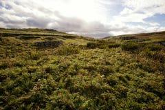 widok nieba trawy, szeroki Zdjęcia Royalty Free