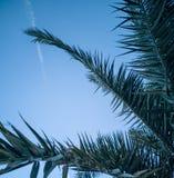 Widok niebo przez gałąź zdjęcie royalty free