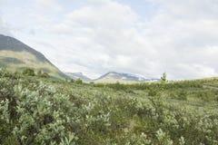 Widok Norweski park narodowy Zdjęcia Royalty Free