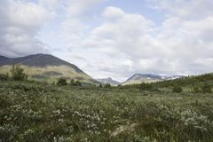 Widok Norweski park narodowy Fotografia Stock