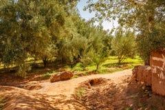 Widok oaza pod Ait Ben Haddou fortecą Obraz Royalty Free