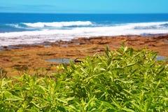 widok oceanu na plaży rocky Zdjęcie Stock