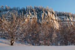Widok od dna do góry Zima, Rosja Urals Obraz Stock