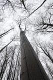 Widok od dna do projektów gałąź drzewa Obrazy Royalty Free