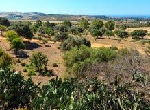 Widok od doliny świątynie, Agrigento, Sicily, Włochy Fotografia Royalty Free