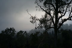Widok od góra przy zmierzchem z lasem w Obrazy Stock