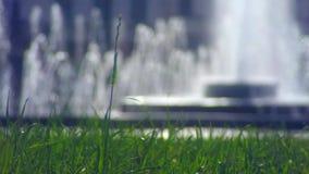 Widok od gazonu dobra na fontannie zdjęcie wideo