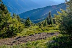 Widok od Huraganowej grani, Olimpijski park narodowy Zdjęcie Stock