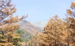 Widok od lasu Zdjęcie Royalty Free