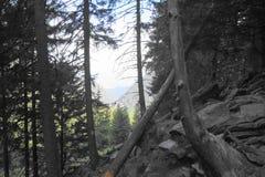 Widok od lasu, Fagaras góry, Carpathians góry, Sibiu, Rumunia Zdjęcia Stock