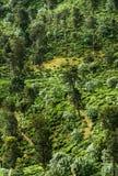 Widok od Małego Adam szczytu, Sri Lanka Zdjęcie Royalty Free