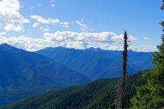 Widok od rogacza parka obozowiska, Olimpijski park narodowy zdjęcia stock