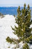 Widok od San Jacinto szczytu w kierunku San Gorgonio góry, San Bernardino las państwowy, Kalifornia zdjęcie stock