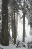 Widok od snowshoeing śladu na Cyprysowej górze Zdjęcia Royalty Free
