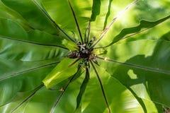 Widok od wierzchołka na zielonej roślinie zdjęcie stock