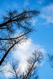 Widok oddolna perspektywa w kierunku nieba błękita chmurnieje pod drzewami Obraz Stock