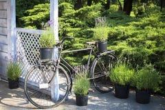 Widok ogródu dom z białym retro drewnianym meble dekorował z kwiatów garnkami Fotografia Stock