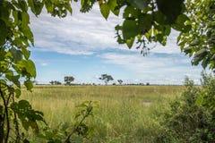 Widok Okavango delta przez krzaków Obrazy Royalty Free