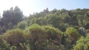 Widok oliwny las z ruinami antyczny kasztel na tle zbiory