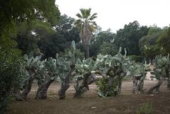Widok Parco della Favorita obrazy royalty free