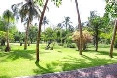 Widok piękny ogród z tropikalnymi palmami obraz royalty free