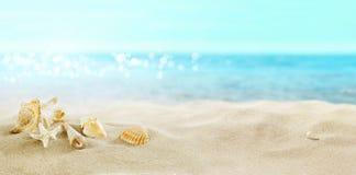 Widok piaskowata pla?a Skorupy w piasku zdjęcie stock