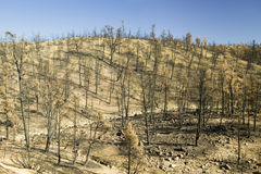 Widok pożarnicza szkoda od dnia ogienia, 2006, wzdłuż Lockwood Dolinnej drogi (blisko sosny Mnt i Frazier park w Lasu Padres obyw zdjęcie stock