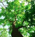 Widok pod drzewem Zdjęcie Stock