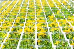Widok pole dandelions przez metal siatki obraz royalty free