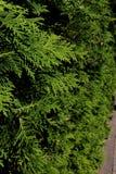 Widok potomstwo zieleni gałąź jadł na słonecznym dniu, tło obraz stock