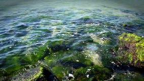 Widok powierzchnia denni kamienie w dniu i Czarny morze zbiory wideo
