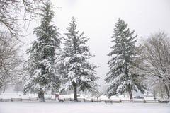 Widok przeniesienie plaży park podczas zimy burzy w Ladysmith, BC zdjęcia stock