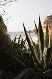 Widok przez agawa kaktusa na pięknej piaskowatej plaży Obrazy Royalty Free