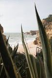 Widok przez agawa kaktusa na pięknej piaskowatej plaży Fotografia Stock