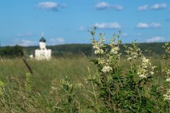 Widok przez Bogolubovo łąki w kierunku kościół intercesja Święta dziewica na Nerl rzece Zdjęcie Stock