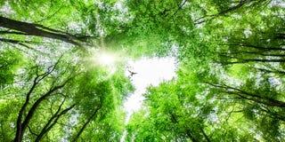 Widok przez drzewnego baldachimu z ptasi wznosić się Obraz Royalty Free