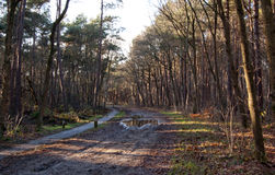 Widok przy drogą w lesie Fotografia Royalty Free