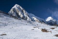 Widok Pumori od Kala Patthar Zdjęcie Royalty Free