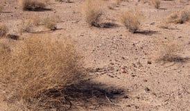 Widok pustynna podłoga Obraz Stock