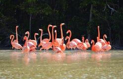 Widok różowi flamingi obrazy royalty free