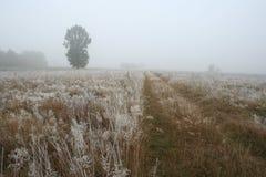 Widok rozen trawy na łące Fotografia Stock