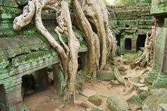 Widok ruiny Ta Prohm świątynia w Siem Przeprowadza żniwa, Kambodża Obraz Royalty Free